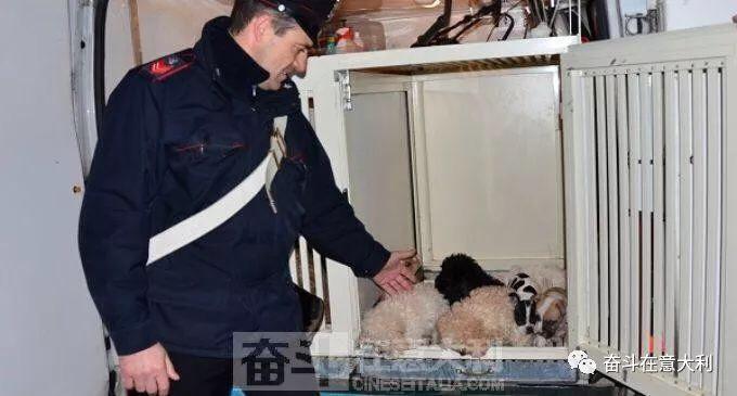 你所不知道的知识,在意大利关于狗的权益