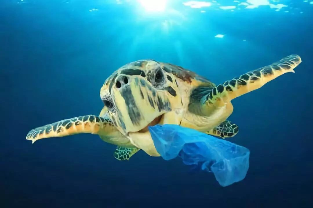 吓人!欧洲国家即将全面禁止一次性塑料制品,中国人还在吃!