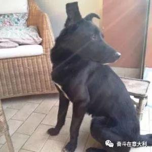 【攻略】领养代替购买 如何在意大利米兰领养一只狗