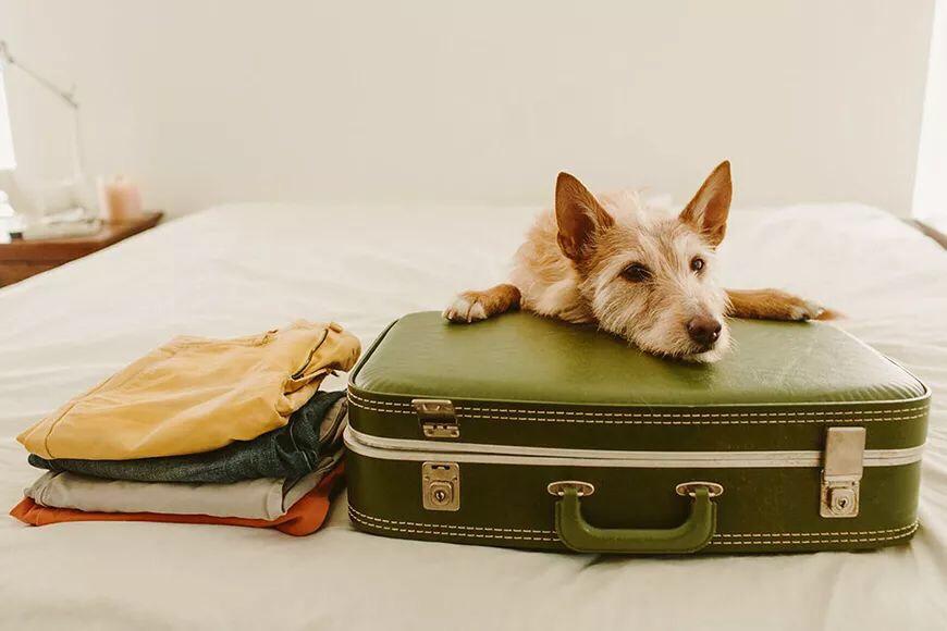 意大利宠物回国图解&步骤指南来啦! 生活百科 第7张